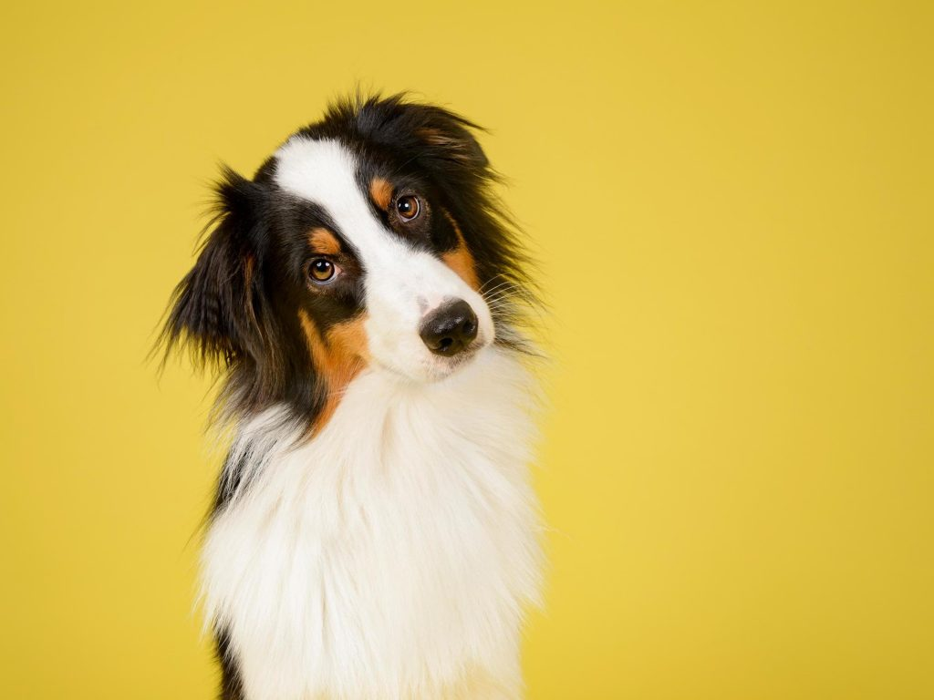 tips to keep your dog healthy
