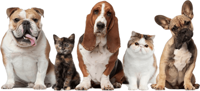 Why are Online Pet Shops so convenient