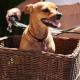Stylish Dog Baskets to Take Your Dog Around Town