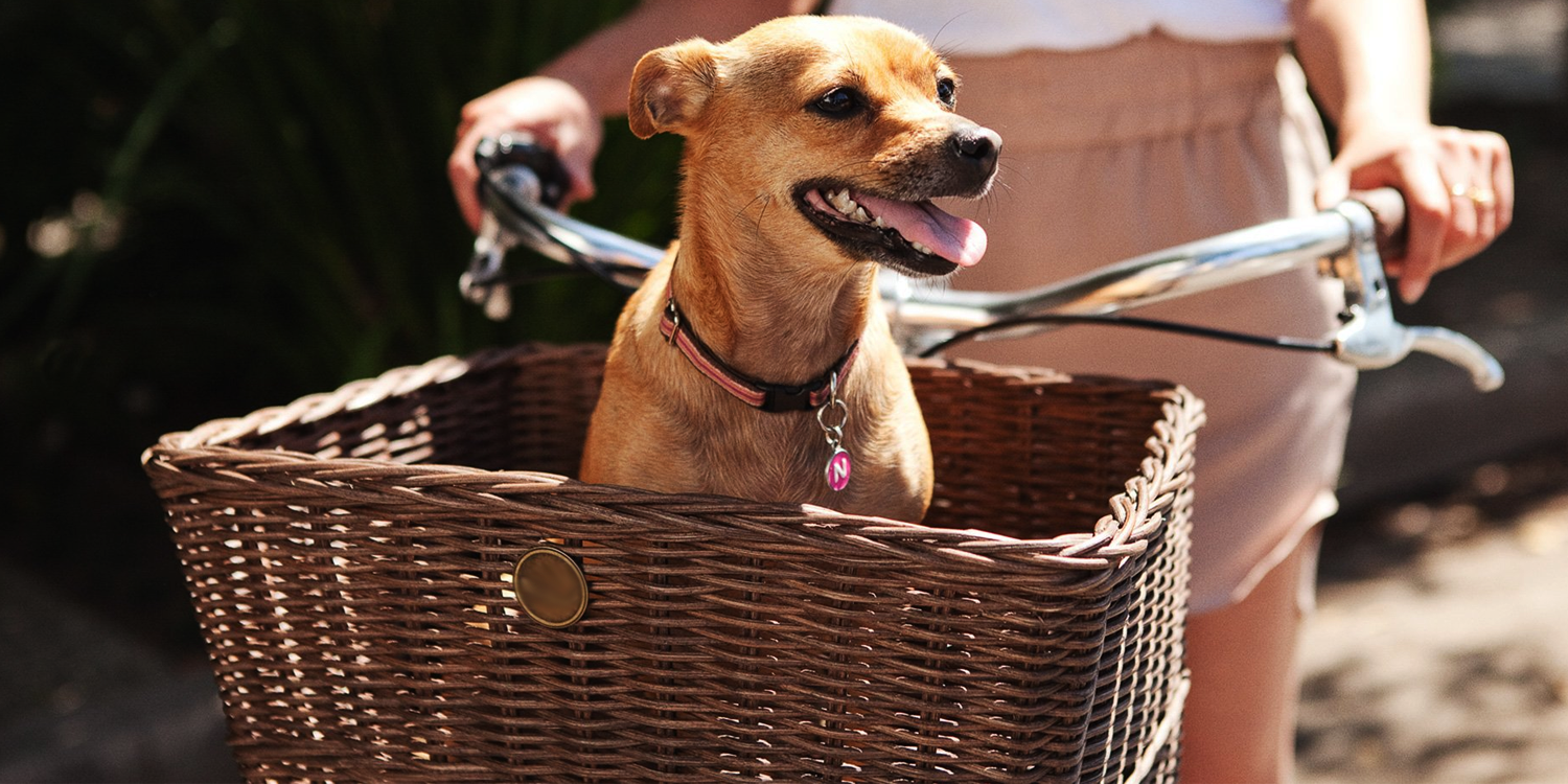Stylish Dog Baskets to Take Your Dog Around Town