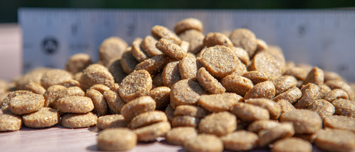 Best Buying Guide For Dog Food Online