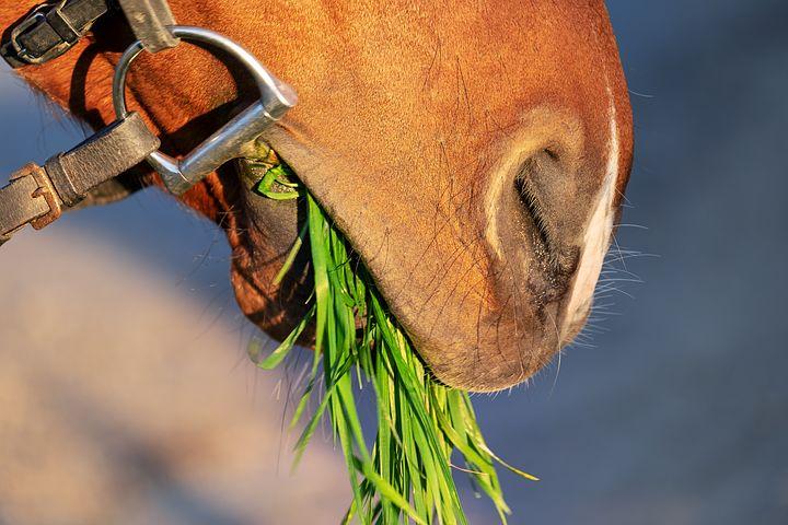 the Sunshine Vitamin for Horses Too